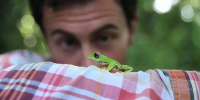 Rainforest-alliance-follow-the-frog-600-72317